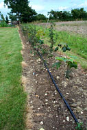 Hedge and Tree Watering Systems by ECP Group, Ipswich, Suffolk